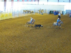 Team Roping Event in Indoor Arena