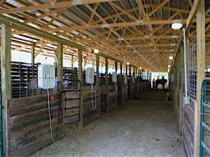 Inside stall barn