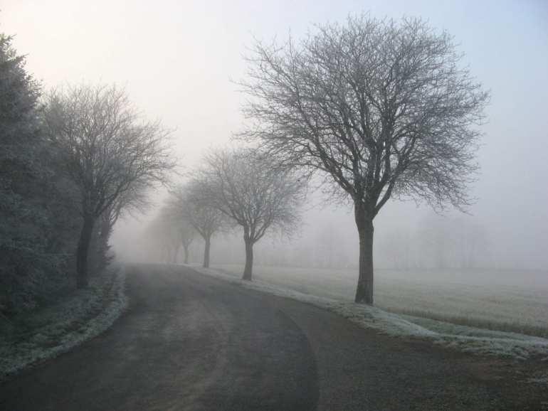 stormtrees