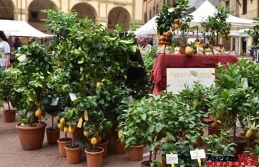 Fiori in Piazza Grande - Arezzo 27