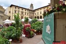 Fiori in Piazza Grande - Arezzo 30