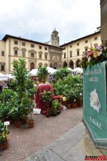 Fiori in Piazza Grande - Arezzo 31