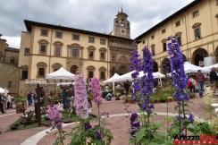 Fiori in Piazza Grande - Arezzo 38