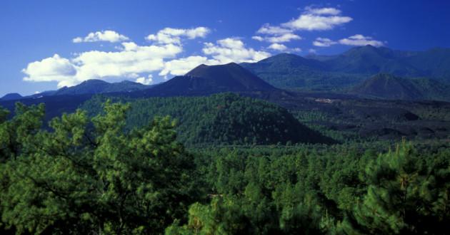 Cambio climático afecta bosques en México