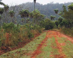 La tala de bosques es el principal factor para que existan inundaciones.