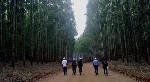 Mato Grosso Forestal