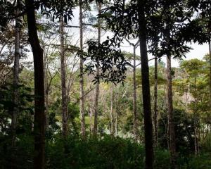 La gestión de los bosques de forma sostenible permite hacer frente a los efectos del cambio climático. Los bosques son grandes captadores de carbono. / Archivo | La Estrella de Panamá