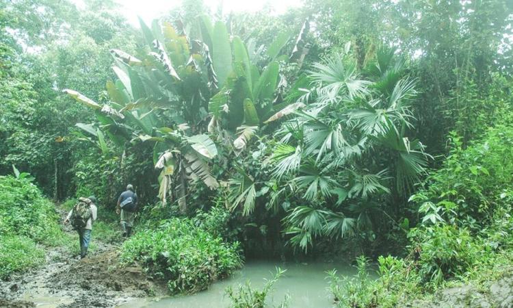 Al menos 21,000 hectáreas de plantaciones forestales están certificadas en el país.
