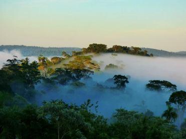 Selva Misionera 1