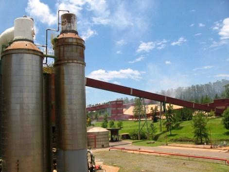 Arauco(Celulosa)3