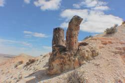 PNParque Nacional BosquesPetrificados de Jaramillo
