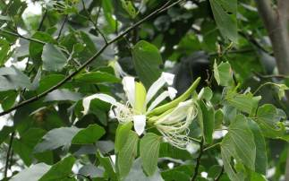 PPPeninsula(Flora)