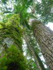 7- bosques