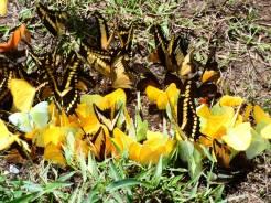 biodiversidad (3)