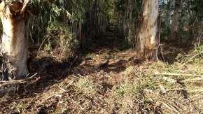 bosquespatagonicos1