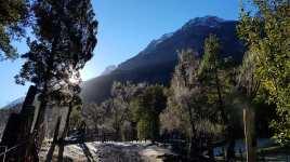 Bosques Nativos2