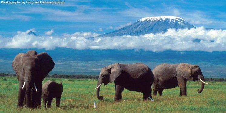 CITES Extincion en Africa