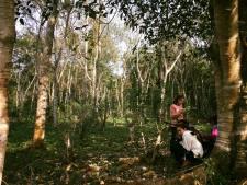 ReservaAgroecologicaIguazu2