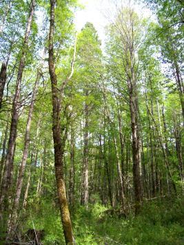 Bosques2