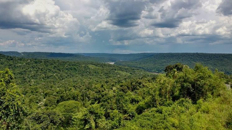 FotoArgentinaForestal.SelvaMisionera(ReservaBiosferaYaboty)