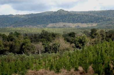 Propiestarios.PlantacionesForestales
