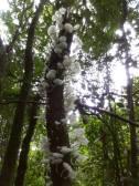 Reserva Privada Pachamama (3)