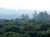 10 - Bosques Nativos