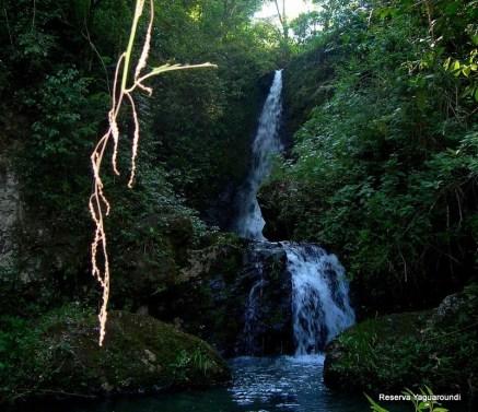 Reserva Privada Yaguaroundi (2)