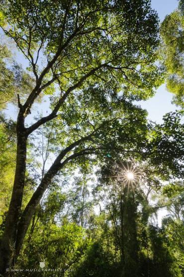 Reserva Privada Yaguaroundi (9)