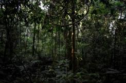 lapacho(bosque4)