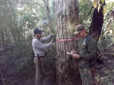 Lapacho Negro reserva Vida Silvestre