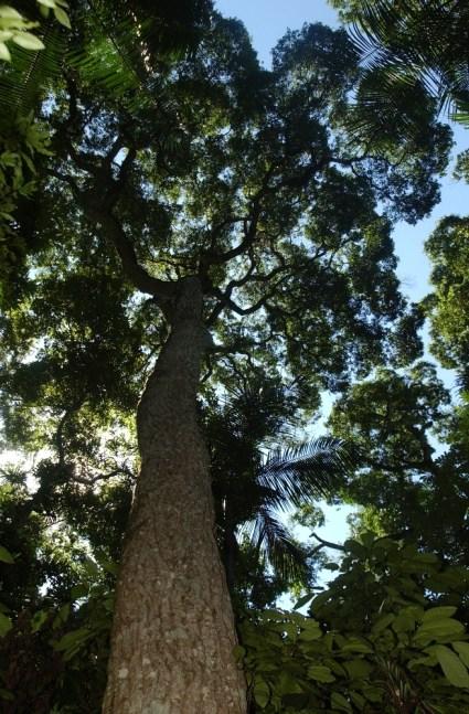 bosques nativos (2)