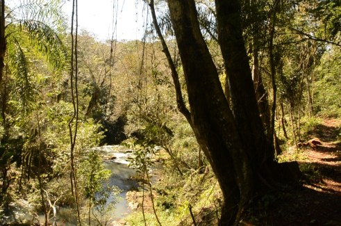 A Paisajes Forestales5