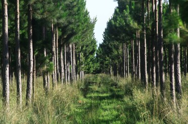 Forestación (1)