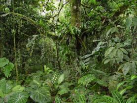 Selva (1)