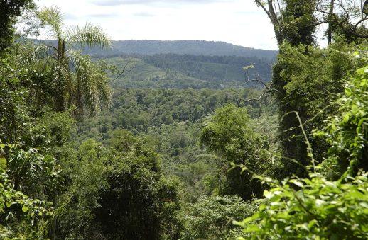 bosque nativos alto uruguay 2