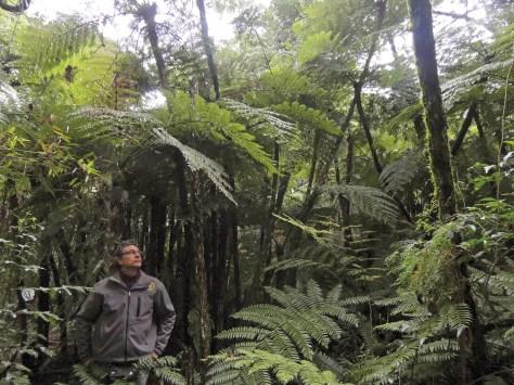 Sotobosque de helechos arborescentes - Selva de Serranías con araucaria - Marcelo Cavicchia