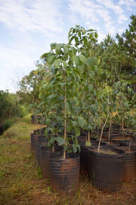 5 Vivero Forestales Hut (Aristobulo del Vallle)