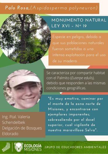 Educación Ambiental Ecologia (Misiones) 7
