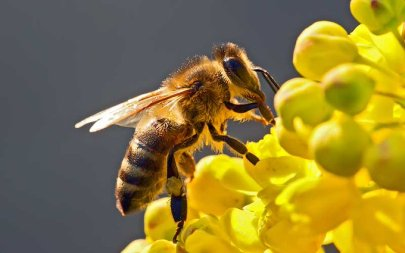7 Biodiversidad