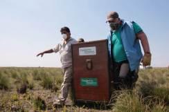 Liberan un Aguara Guazu en Santa Fe (3)