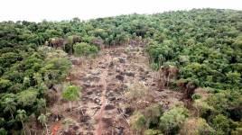 Deforestacion Paraguay