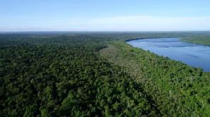 Bosque Atlantico 2