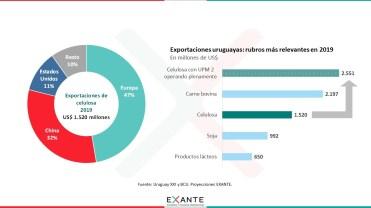 Grafico 5 Exportaciones de Celulosa