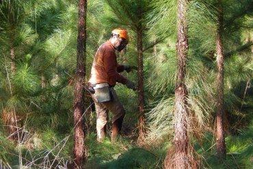 Pindo SA (forestacion)