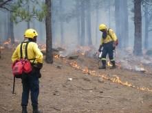 Dia Inernacional del Combiante de Incendios Forestales