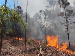 Obera Incendio Forestal 4