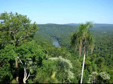 ANP Foto Educacion Ambiental Ecologia Misiones 1