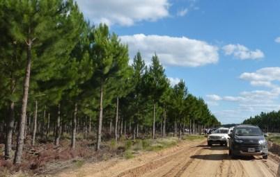 Corrientes Forestaciones 1