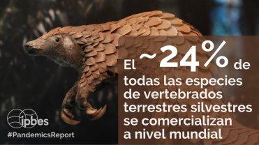IPBES comercio de fauna
